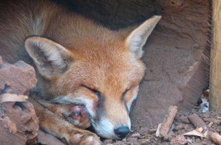 Possum control pellets bait overseas investors