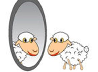 sheepmirror2