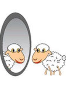 sheepmirror2a