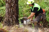 The Primary Industries Good Employer Awards, run by the Ministry for Primary Industries (MPI) and the Agricultural and Marketing Research and Development Trust (AGMARDT), celebrate primary sector employers who demonstrate exceptional employment practices.. Photo New Zealand Forest Owners Association.